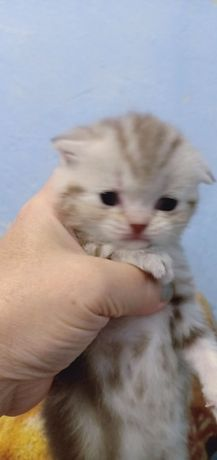 Конфетка котёнок-девочка