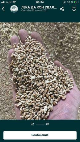 Зерноотходы пшеница отруби комбикорма