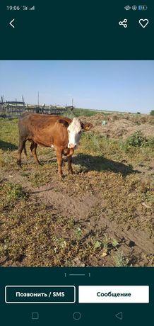 Продам корову стальная