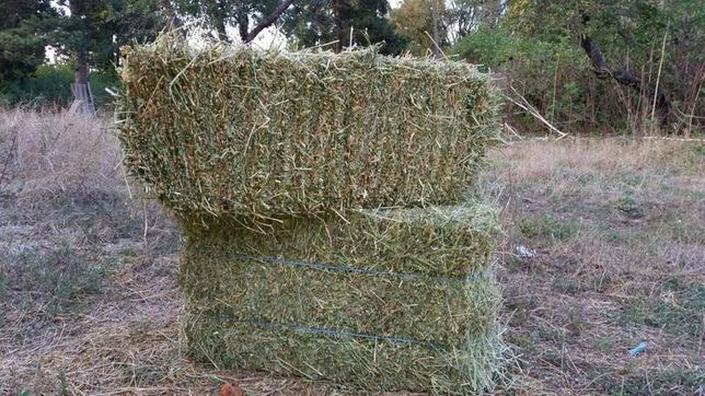 Продаю сено в тюках урожай 2021 года
