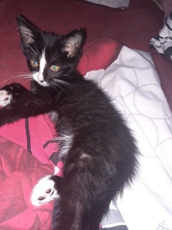 Черно-белый котёнк