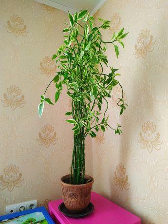 Продам комнатные цветы, есть разные и большие и маленькие, подойдут и