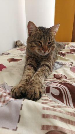 Отдам кота в добрые руки