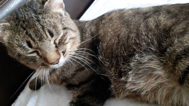 Отдам кота 2,5 года на частный дом в связи с переездом