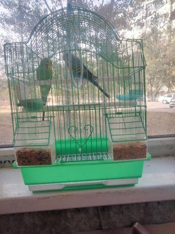 Домашняя птица попугаи