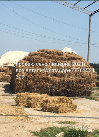 Продаю сено люцерна первый покос