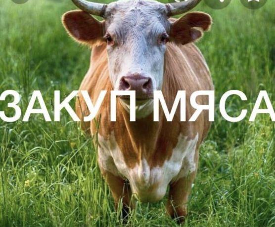 Крс, говядина