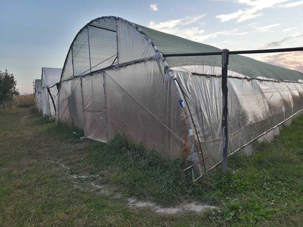 Solar/solarii (sera/sere) legume/fructe pentru agricultura