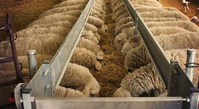 Овцы романовские дорпер та другие