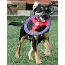 Dog Freesbee Fantasy Flier