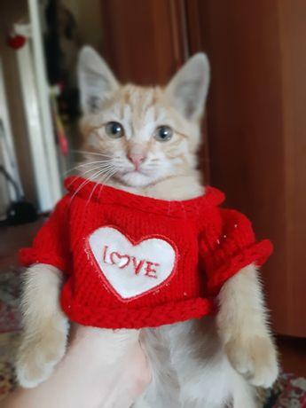Отдам рыжего котёнка, мальчик