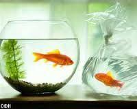 аквариумы круглые и рыбки