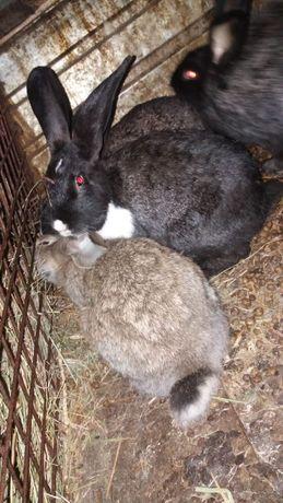 Срочно продам кроликов