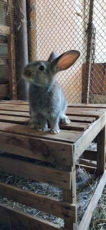 Кролики симпотные