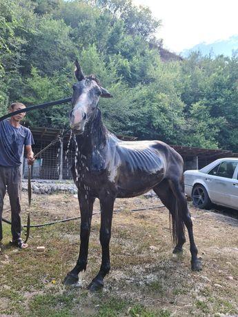 Продам 3 годовалого Коня.