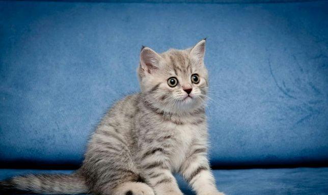 Выбери в подарок котёнка-подари любимым котёнка!