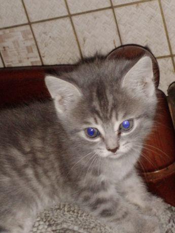 Отдам котенка девочку