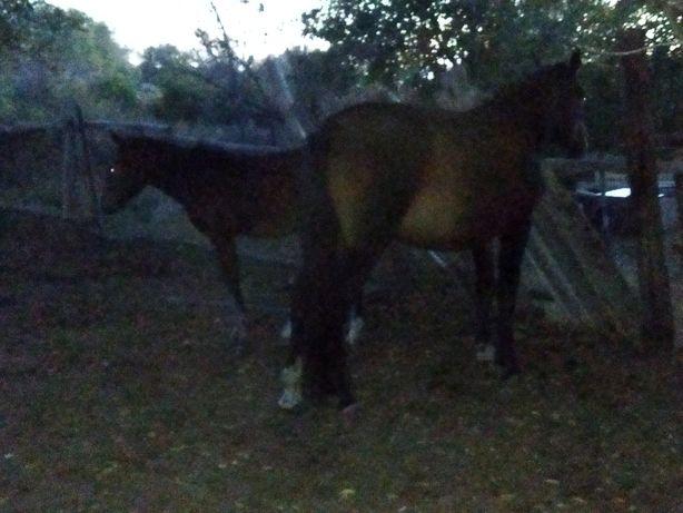 Продам лошадь с жеребёноком