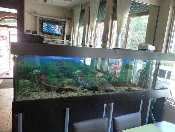 Аквариум 800 литра с шкаф и риби
