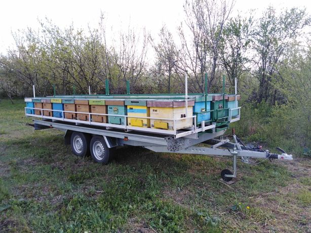 De vânzare remorca apicola cu paleta de 44 stupi