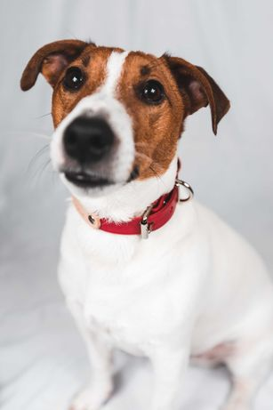 Каишка за куче от естествена кожа с персонализация в червено и натурал