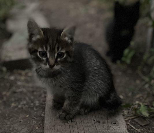 Отдам котят
