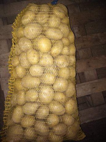 Семена картофи и картофи за консумация.