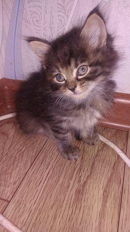 Отдам котят в любящие руки