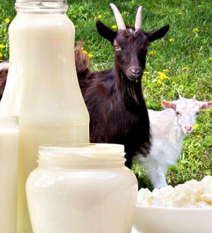 Козие молоко очен полезное