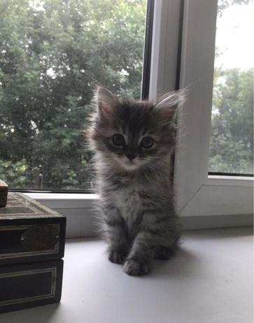 Отдам котят в хорошие руки !
