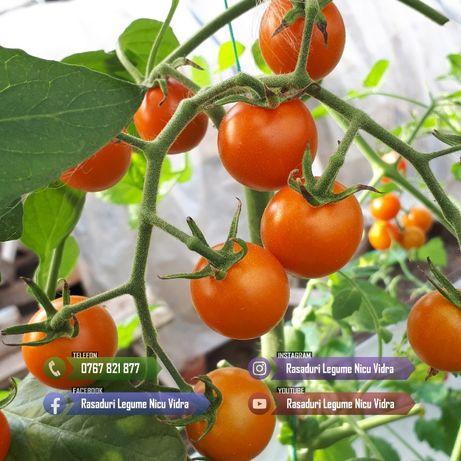 Vand Rasad Rosii Cherry Rosu / Galben / Negru si alte Rasaduri Legume