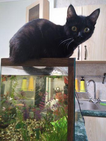 Пропала чёрная кошка 5мес Жетысу1