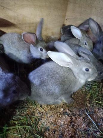 Кролики крольчата