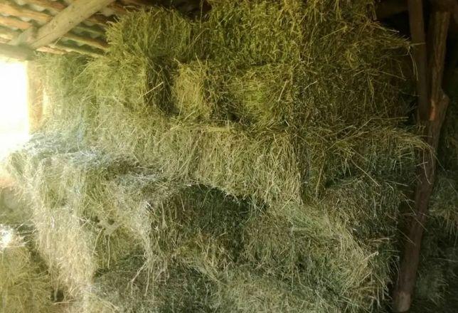 Продаю сено в тюгах