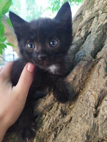 Котёнок мальчик в добрые руки