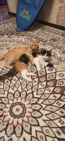 Бесплатно отдам кота и кошку