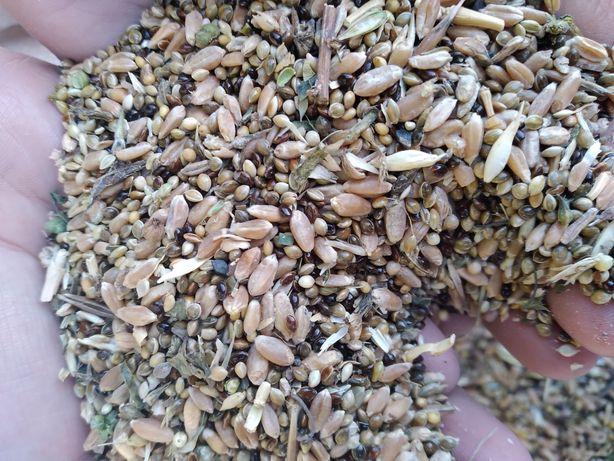 Зерноотход,  дробленка