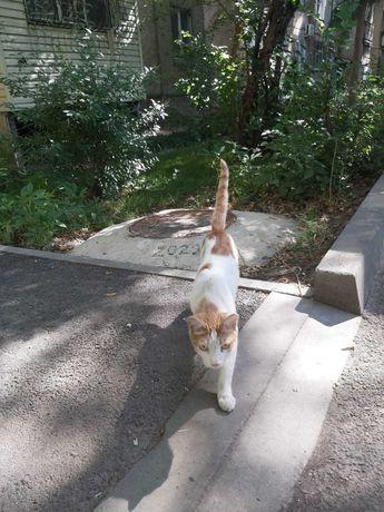 Найден Рыжо-белый взрослый кот