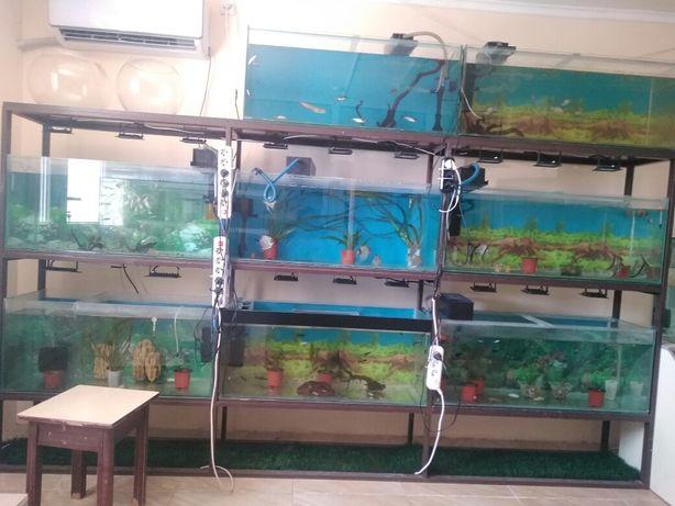акварюм и рыбки оборудование