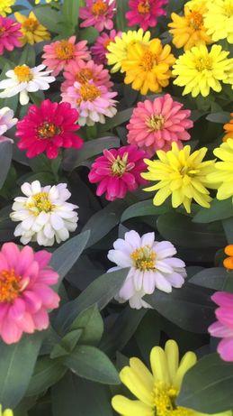 Садовые цветы оптом