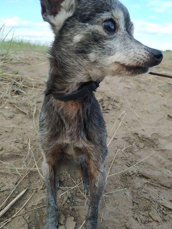 Ищу хозяина для собаки-девочки