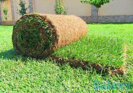 рулонный газон      .