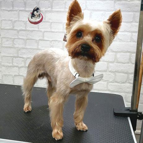 Coafor canin și Petshop