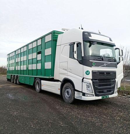 Transport national si international de animale vii