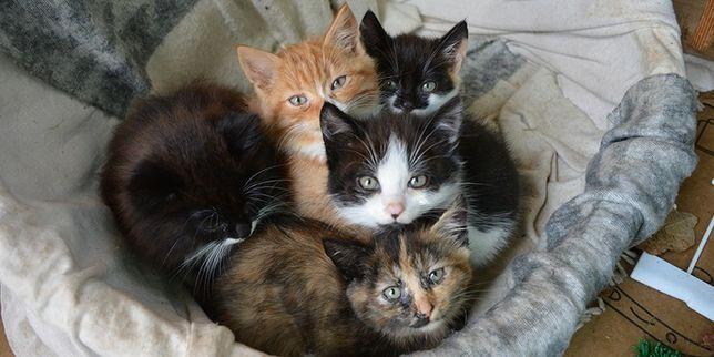 Котята в добрые, заботливые руки.