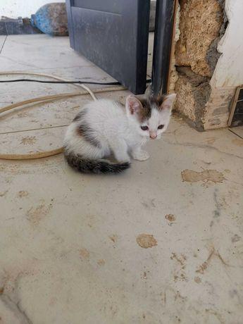 Котенок, котята в добрые руки