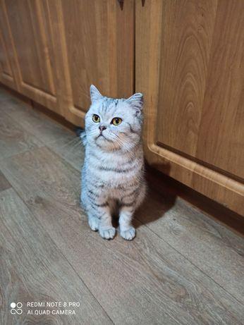 Кошка и котята в хорошие, добрые руки, можно отдельно