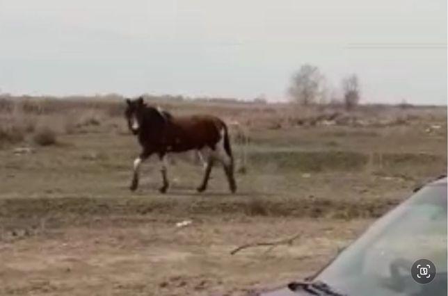 Срочно! Пропали лошади 2 головы! Хорошее вознагрождение!