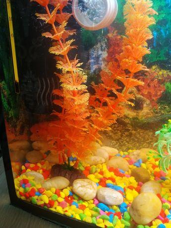 Продам аквариум 55 литров.