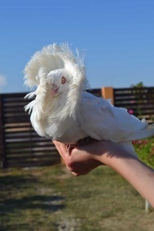 Porumbei (Maria Stuart)